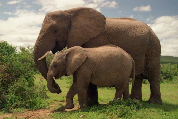 elephantsafrica